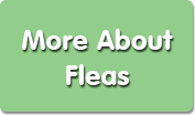 More about Fleas Button